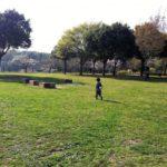 我孫子市ふれあいキャンプ場は芝生