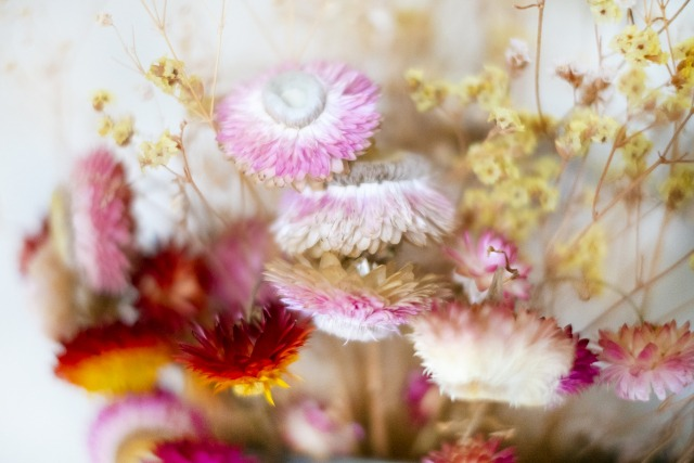 ハーバリウムにおすすめの花材:ミニシルバーデイジー