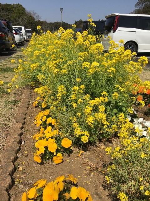 千葉県成田市坂田ヶ池公園駐車場の花