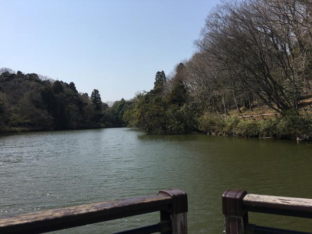 千葉県成田市坂田ヶ池総合公園の池の様子