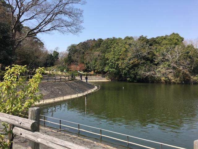 千葉県成田市坂田ヶ池公園の池の様子