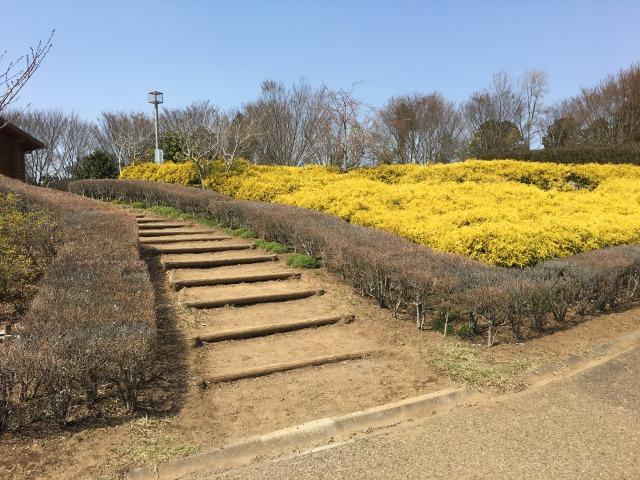 千葉県成田市坂田ヶ池公園、お花がたくさんある