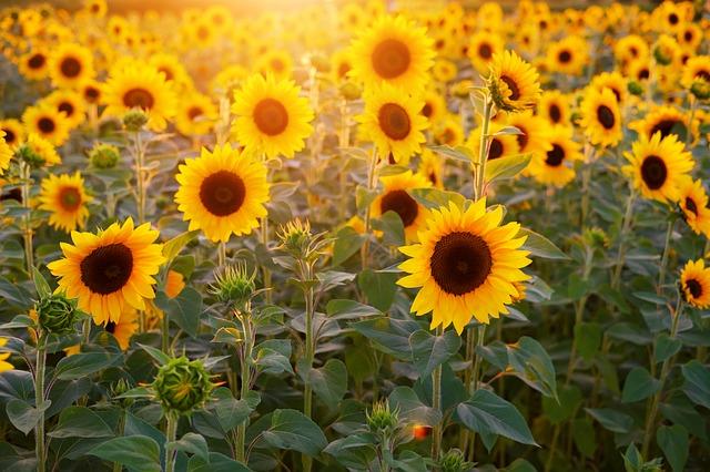 外出時の日焼け対策:そもそも紫外線って何がいけないの?
