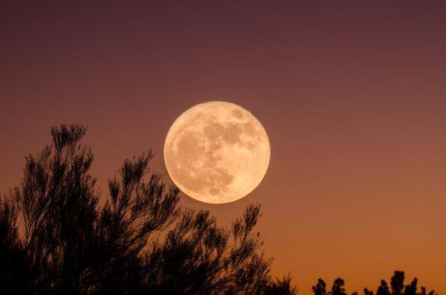 【2019年中秋の名月】こどもにも伝えたいお月見の風習や楽しみ方